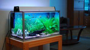 https://aquaristguide.com/best-filter-for-planted-tank/